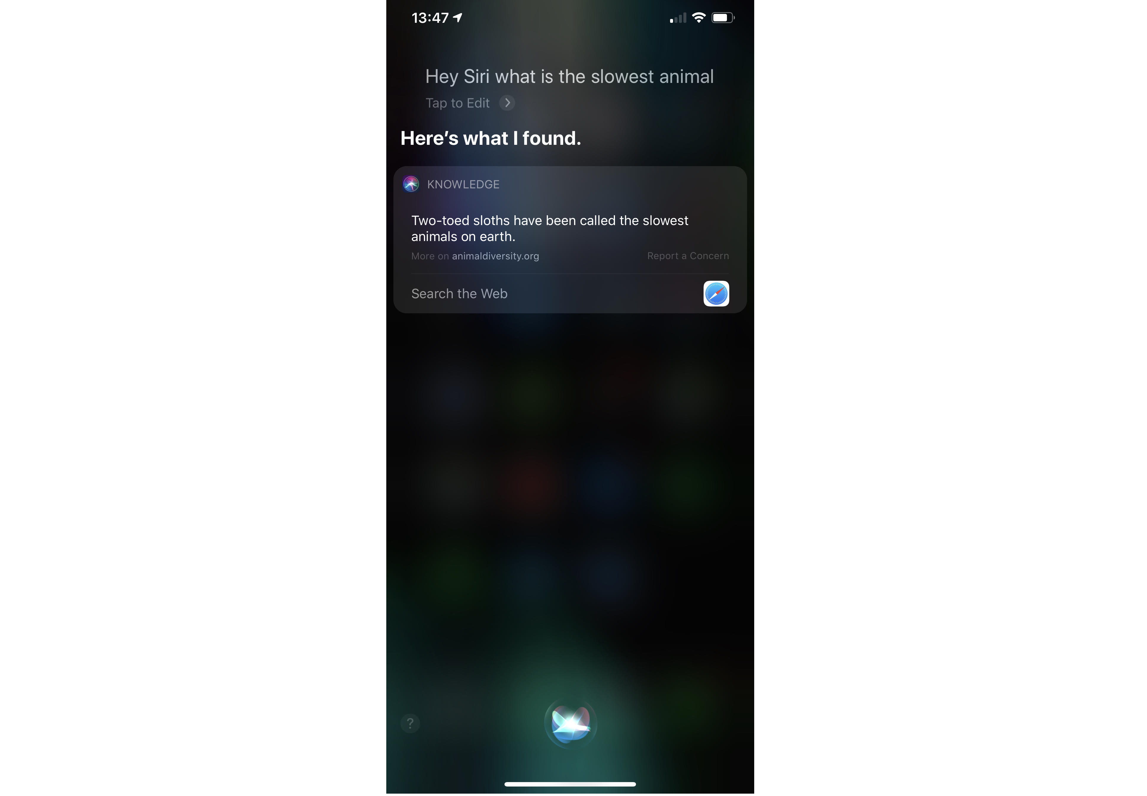 Siri search for slowest animal