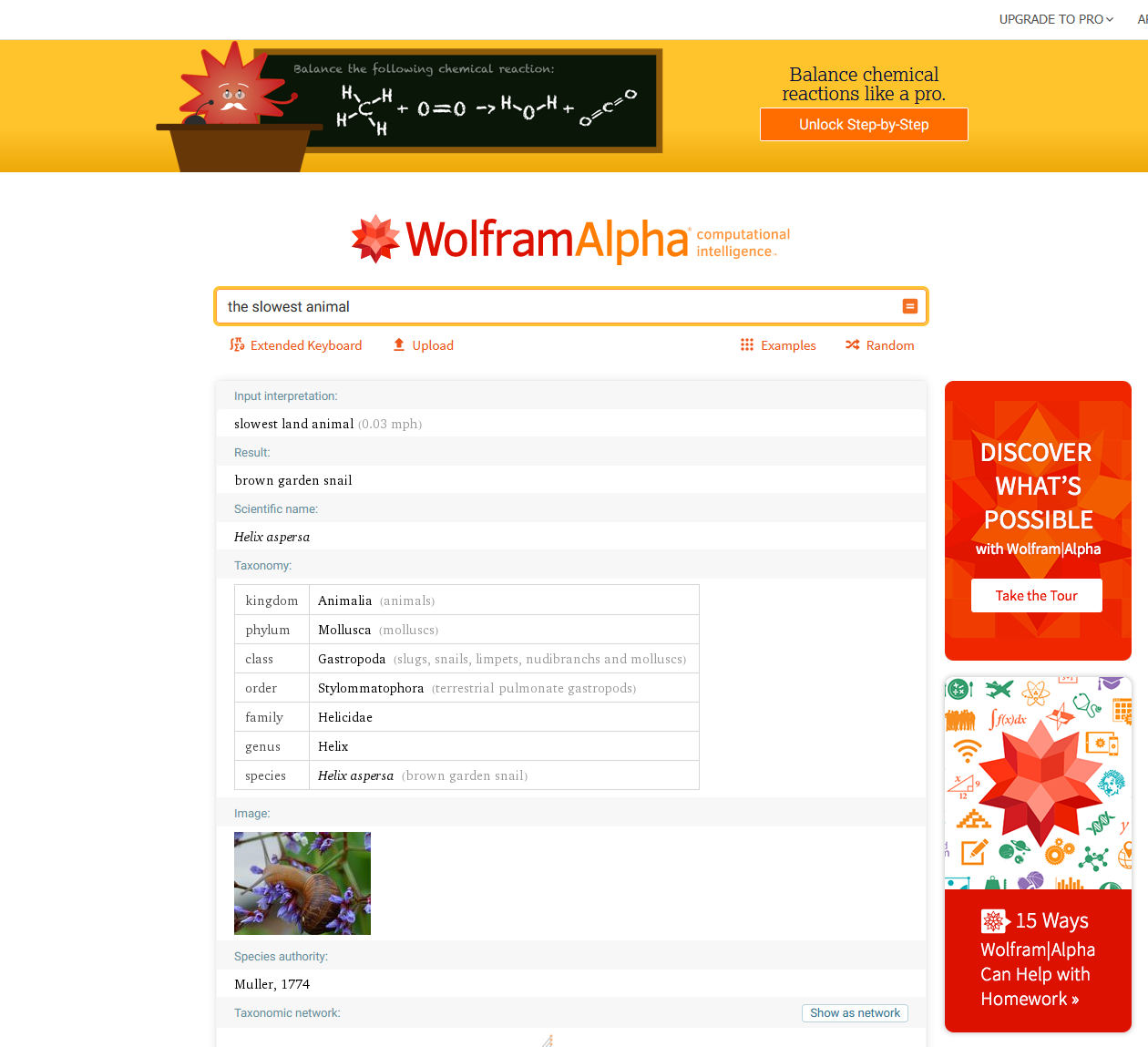 Wolfram Alpha search for slowest animal
